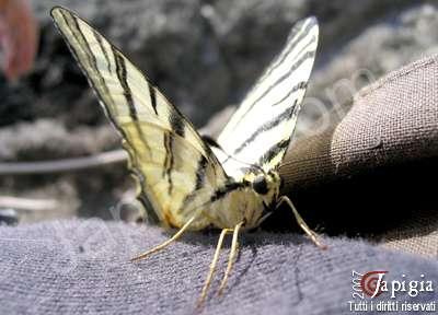 la farfalla salvata dalle onde